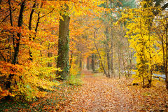 Colorful autumn. Pathway in the autumn forest, Germany Royalty Free Stock Photography