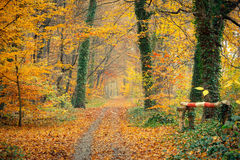 Colorful autumn. Pathway in the autumn forest, Germany Stock Image