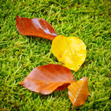 Colorful autumn background. Colorful autumn foliage on the moss background Stock Photo