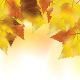 Colorful autumn background Stock Image