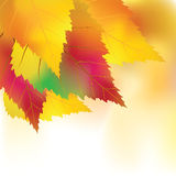 Colorful autumn background Royalty Free Stock Photography