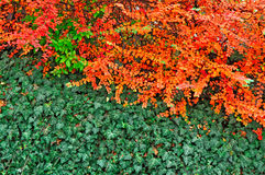 Colorful autumn background Royalty Free Stock Images