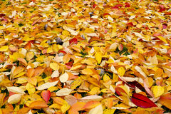 The colorful Autumn Background Royalty Free Stock Photography