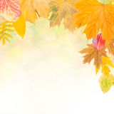 Colorful autumn background-5 stock illustration