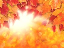 Colorful autumn background. Fall leaves and abstract sun light royalty free stock photography