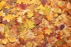 Colorful autumn background. Stock Photography