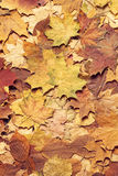 Colorful autumn background. Fallen leaves. Royalty Free Stock Photo