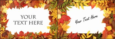 Colorful autumn background. Royalty Free Stock Photo