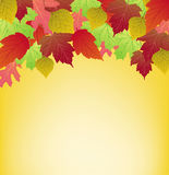 Colorful autumn background with leaves. This image represents a colorful autumn background with leaves vector illustration