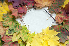 Colorful autumn background of maple leaves. Royalty Free Stock Photo