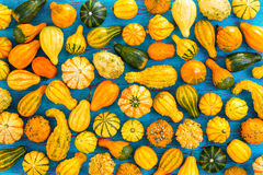 Colorful autumn background of ornamental gourds Stock Photos