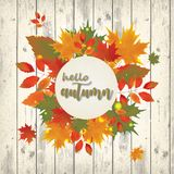 Autumn background with red falling leaves Stock Image