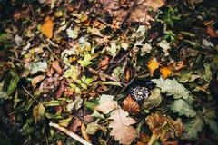 Colorful autumn background. Stock Photos