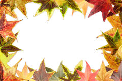 Colorful autumn background Stock Photos