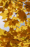Colorful autumn. Background Royalty Free Stock Photos