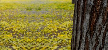 COLORFUL AUTUMN BACKGROUNDS. YELLOW LEAVES FALL FROM TREES TO GROUND. AFTER RAINNING.  stock photos