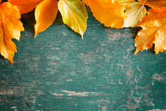 Colorful Autumn Banner Royalty Free Stock Images