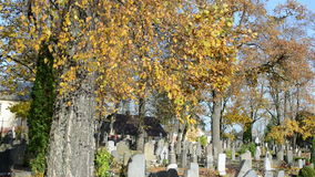 Colorful autumn birch tree branch grow rural country cemetery stock video
