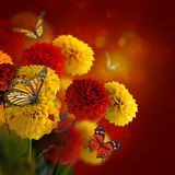 Colorful autumn chrysanthemums Royalty Free Stock Images