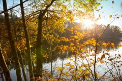 Colorful autumn in the city park with lake. Autumn Landscape. royalty free stock image
