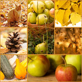 Colorful autumn collage Royalty Free Stock Image