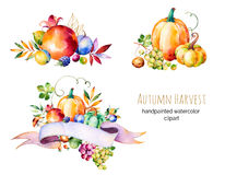 Colorful Autumn Collection With Fall Leaves,branches,berry Royalty Free Stock Image