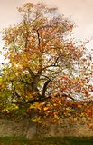 The colorful autumn. Colored leaves on tree in october in a park. Colored leaves on tree in october stock photography