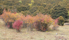 Colorful autumn with country road Stock Images