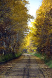 Colorful Autumn country road Stock Images