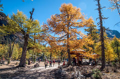 Colorful autumn. Daocheng, Sichuan , China - October 21,2008 : Chinese tourist visting autumn forest in Yading national level reserve in Daocheng, Sichuan Stock Photos