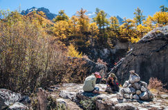 Colorful autumn. Daocheng, Sichuan , China - October 21,2008 : Chinese tourist visting autumn forest in Yading national level reserve in Daocheng, Sichuan Royalty Free Stock Photo