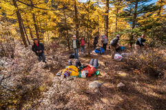 Colorful autumn. Daocheng, Sichuan , China - October 21,2008 : Chinese tourist visting autumn forest in Yading national level reserve in Daocheng, Sichuan Royalty Free Stock Images