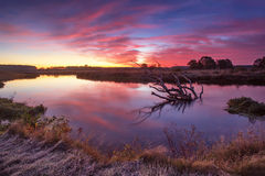 Colorful autumn dawn. Old snag in the river Stock Image