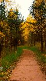 Colorful Autumn Day Royalty Free Stock Photos