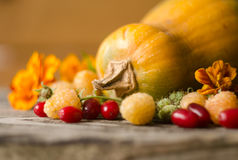 Colorful autumn decoration of pumpkins, yellow raspberries, dogwood and marigold. Royalty Free Stock Photos