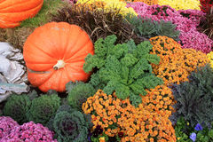 Colorful Autumn Display of Plants and Pumpkins Stock Photo