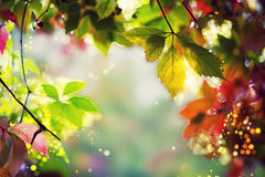 Colorful autumn / fall leaves - Art work, Bokeh, Lens flares - Text, body, copy space royalty free stock photography