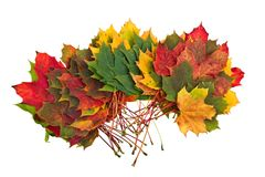 Colorful autumn fall leaves maple Stock Photo