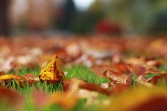 Colorful autumn fall leaves piled up proudly in the end of summer green grass. Golden colors of autumn litter the lawn in the last months of the year in Yakima Royalty Free Stock Photos
