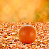 Colorful autumn fallen leave and abstract orange bokeh backgroun Royalty Free Stock Photos