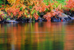 Colorful Autumn Ferns Water Reflection Stock Images