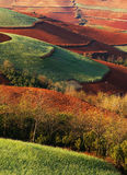 The colorful autumn filed Stock Images