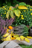 Autumn flowers in the garden Royalty Free Stock Photography