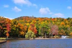 Colorful autumn foliage. Beautiful colorful autumn foliage in New England Stock Image
