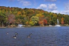 Colorful autumn foliage. New England colorful autumn foliage and ducks in lake Stock Photography