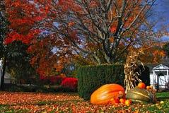 Colorful autumn foliage. Beautiful colorful autumn foliage in New England with pumpkins decoration Stock Photos
