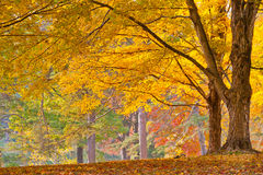 Free Colorful Autumn Foliage Stock Photo - 45688550