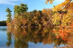 Forested penisula in autumn colors juts out into a lake. Colorful autumn foliage decorates this lakeside landscape, glowing against a bright blue sky Royalty Free Stock Images