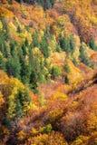Colorful autumn foliage Stock Photo