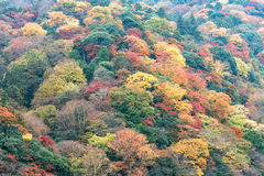 Colorful autumn foliage mountain forest, Arashiyama area, Kyoto, Japan Royalty Free Stock Photography